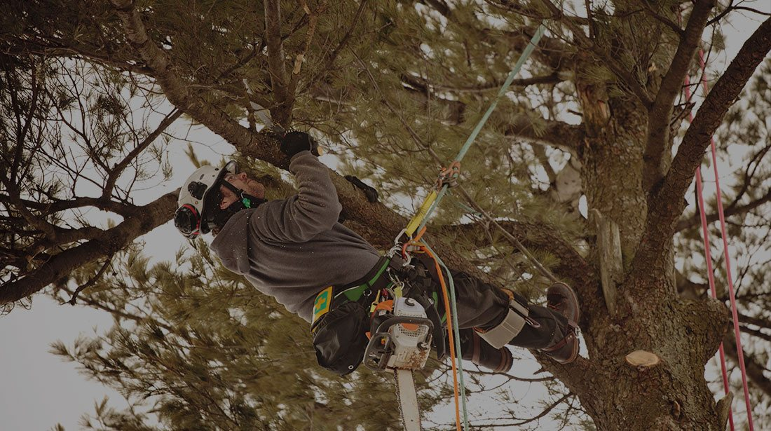 LinkNow Media: Emergency tree removal in Montreal