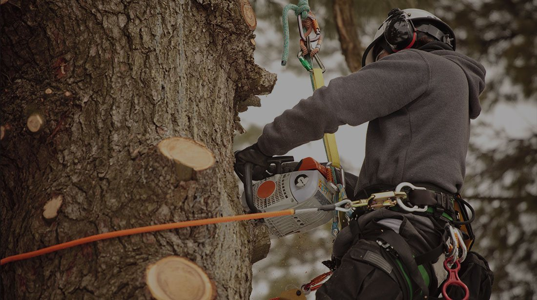 LinkNow Media: Stump and tree removal in Montreal