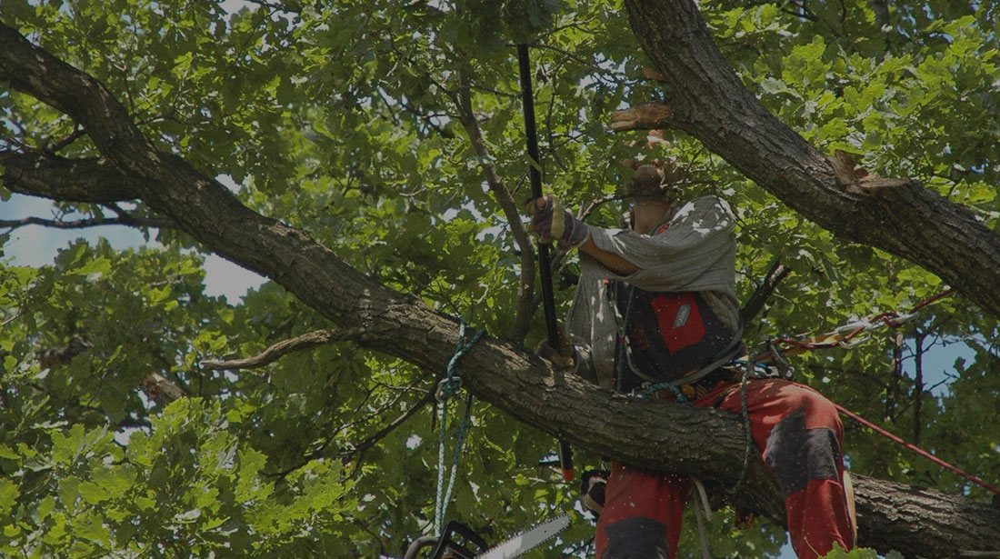 LinkNow Media: Tree cabling and bracing in Montreal