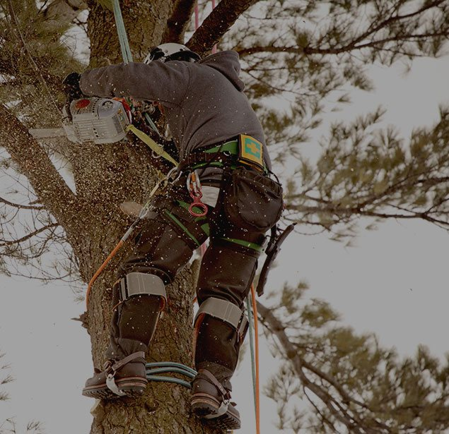 LinkNow Media: Tree health in Montreal