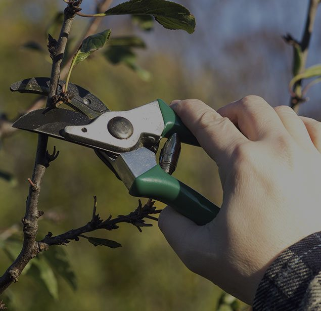 LinkNow Media: Tree pruning in Montreal